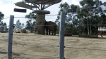 San Diego Zoo - Elephants