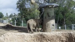 San Diego Zoo - Elephants