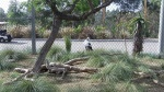 San Diego Zoo - Eagle
